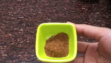 Clay pot fish